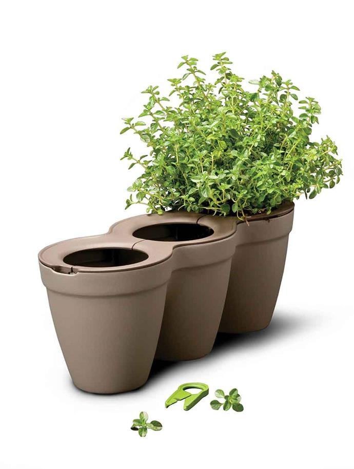 Keter 'Ivy' **herb planter** in grey, $23.