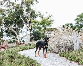 Dog standing on a garden path