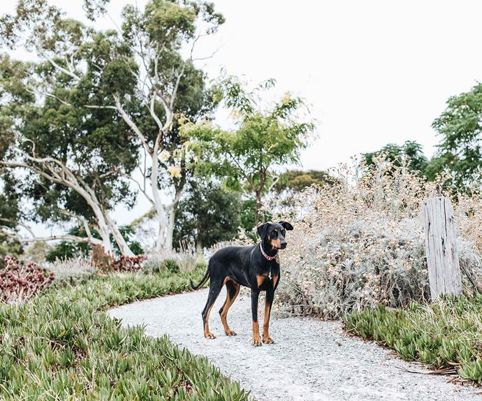Dog standing on a garden path