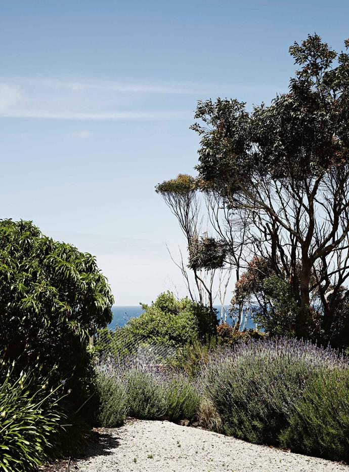 "Bass Strait is visible from the garden. The house sits in a [rambling garden](https://www.homestolove.com.au/magnificent-qld-garden-abloom-with-wisteria-and-rambling-roses-13978|target=""_blank"") that falls away steeply into the valley. From the upstairs rooms and deck, as well as from the garden patio, there's a view across to the opposite hill, where the grazing black cattle seem a stone's throw away."