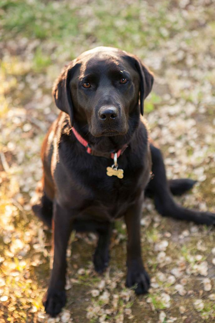 Lulu the labrador is Ardgartan's other canine resident.