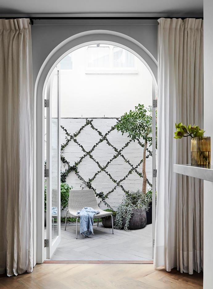 Star jasmine is trained along the wall, delivering fragrance and contrast. In the pot is a mountain cabbage tree (Cussonia paniculata), underplanted with Dichondra 'Silver Falls', sage and thyme. Linen curtains, In Vogue Blinds. Chair, Weylandts.