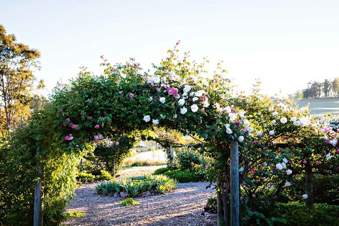 "The entrance to the enclosed [rose garden](https://www.homestolove.com.au/romantic-rose-gardens-13868|target=""_blank"") with Veilchenblau and New Dawn roses growing over the arch.When Ruth and Anthony married in 1960, Ruth initially cared for and added to her mother-in-law's garden, which flanks the 97-year-old [bungalow homestead](https://www.homestolove.com.au/architecture-styles-australia-14457