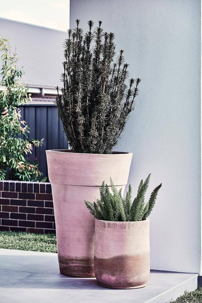 Terracotta pots are vulnerable to overheating and will require frequent watering.