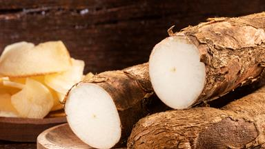 Arrowroot: how to grow and care for this tropical root vegetable
