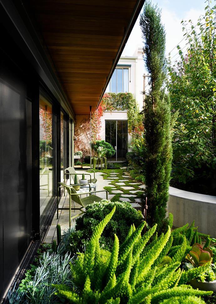 On view from every room in the home, the courtyard  looks larger than it is thanks to a layered planting scheme of interesting species including (in the foreground) bright-green plumes of foxtail fern (*Asparagus densiflorus* 'Myersii'), curly jade plant (*Crassula undulata*) and pencil pines (*Cupressus sempervirens* 'Glauca'). Dissolving the solid paving into stepping stones also visually expands the space.