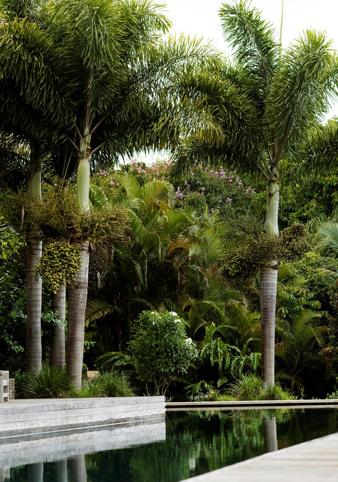 The tranquil swimming pool is flanked by a grove of handsome plants.