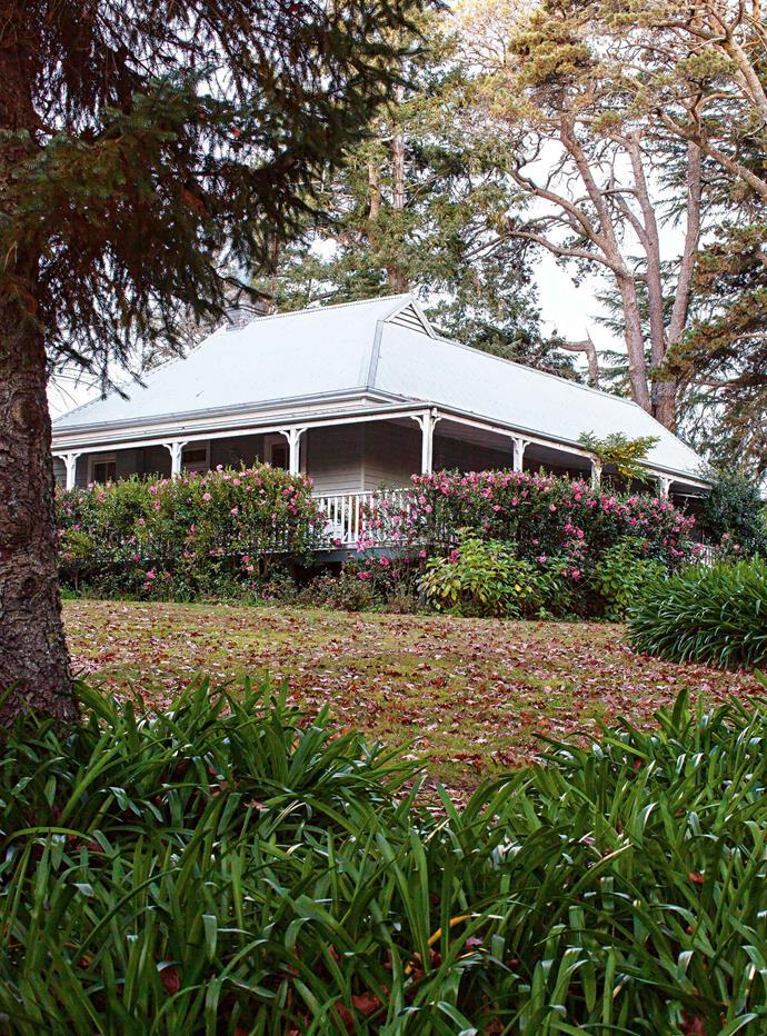 A hedge of camellias surrounds the cottage's verandah.