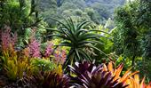 A lush tropical garden in Byron Bay