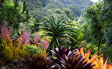 A lush tropical garden in Byron Bay