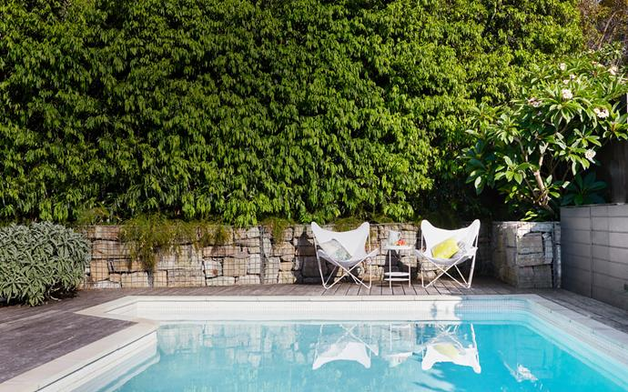 Nicola's pool renovation included sandblasting the concrete interior, installing white waterline tiles and laying new sandstone coping. Along the boundary, a gabion wall has been filled with sandstone unearthed from the excavation while a row of weeping lilly pilly (*Waterhousea floribunda*) creates a lush privacy screen and evergreen backdrop.