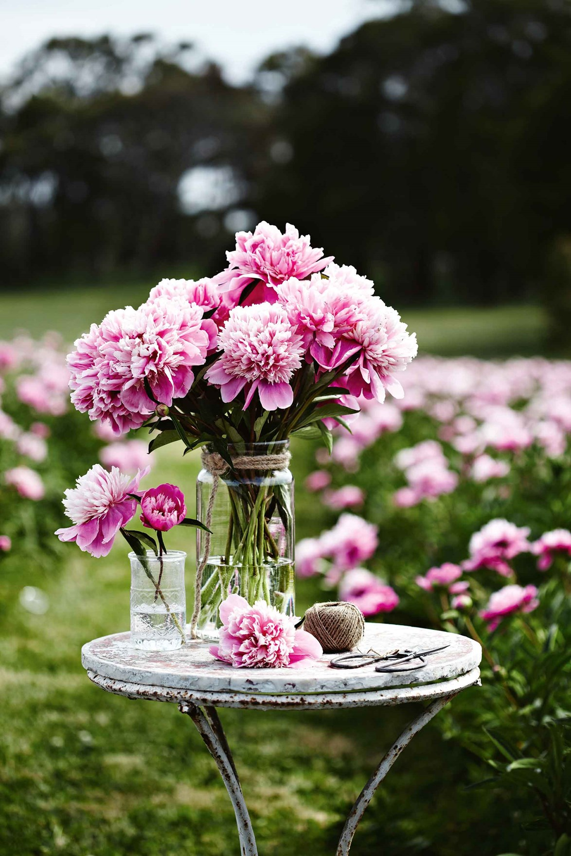 "A never-ending supply of beautiful blooms is just one of the perks of owning a [peony farm](https://www.homestolove.com.au/spring-hill-peony-farm-13362|target=""_blank""). The highest paddock on this 28-hectare farm in the rich and rolling volcanic country between Daylesford and Kyneton, is planted with peonies — 10,000 of them to be precise."