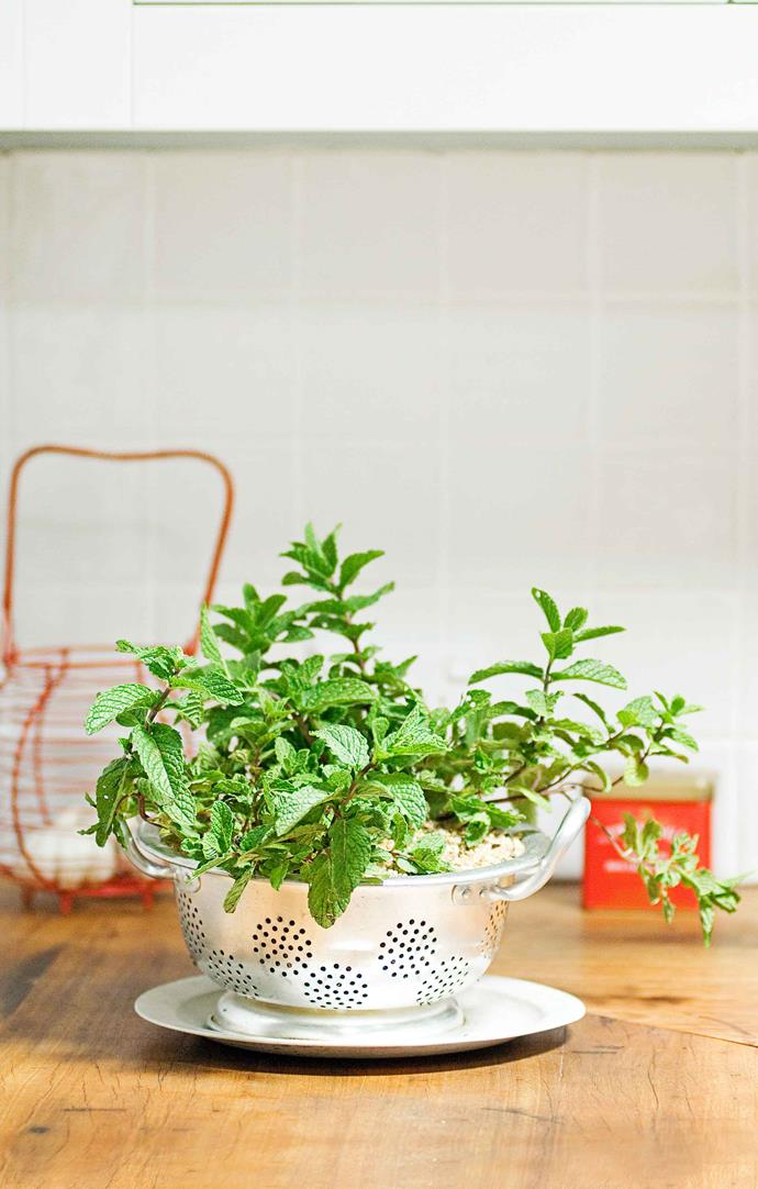 Mint is best grown in containers, say experts.