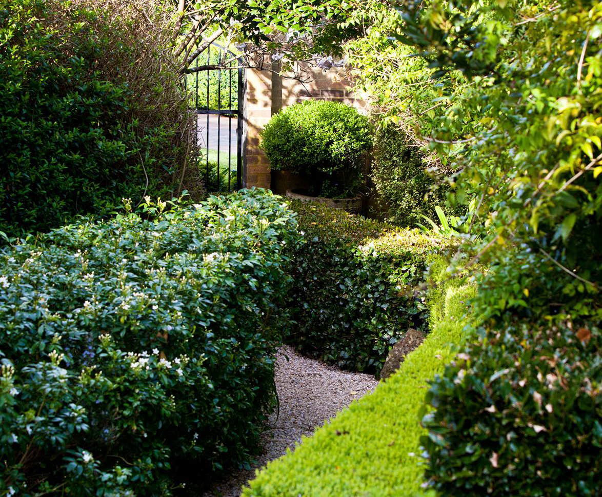 The top 5 plants for creating a hedge