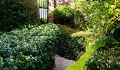5 best plants for creating a hedge