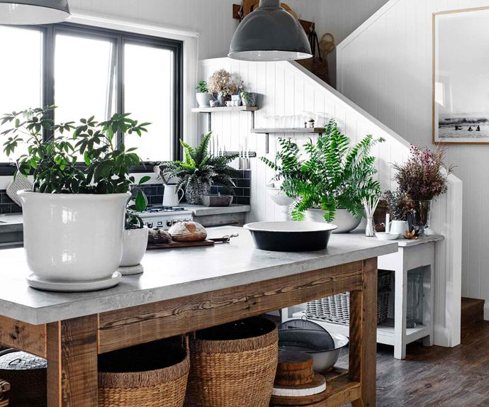 Kitchen with large timber island bench and indoor plants