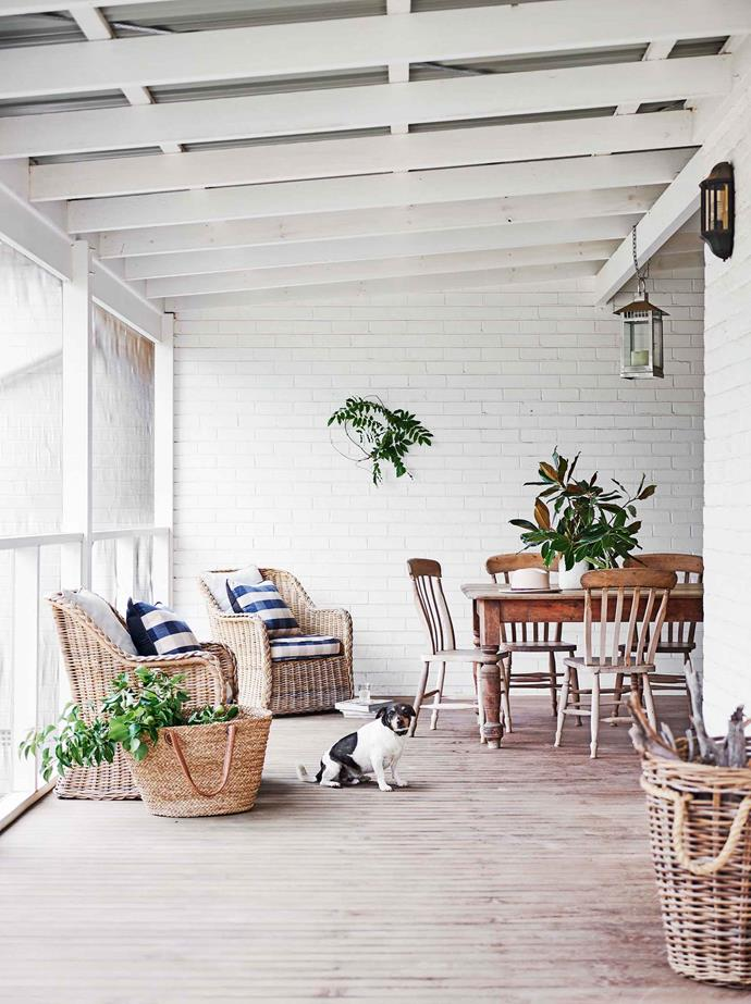 "Max waits by the dining area on the wide covered verandah that wraps around the house. ""He's the most unfaithful dog you could ever know,"" says Katie. ""He loves everyone."""
