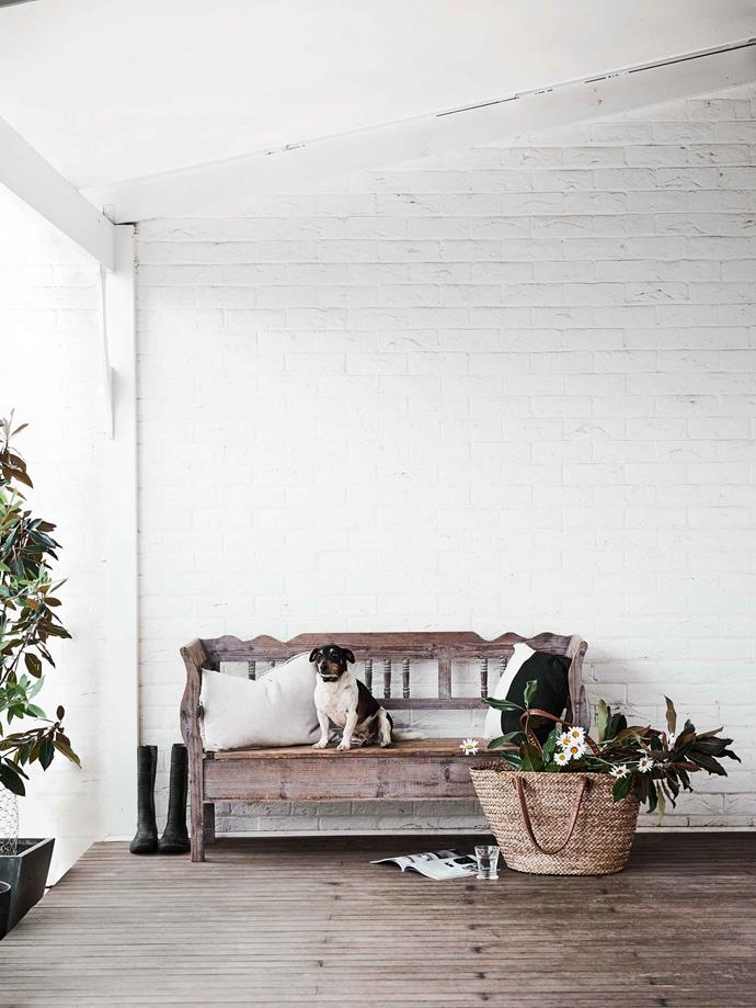 "Max the Jack Russell sits on the verandah on a bench from [Provincial Home Living](https://www.provincialhomeliving.com.au/|target=""_blank""). The seat lifts up and Katie Walker stores gardening tools inside."