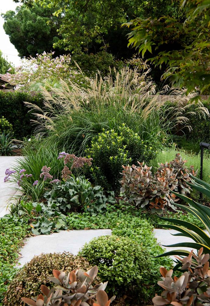 **Facade** Some of the species in the drift plantings, which mimic natural growth, are fountain-like silver maiden grass, Indian hawthorn, Copper Spoons, clipped buxus balls, Smooth Agave and sea lavender.