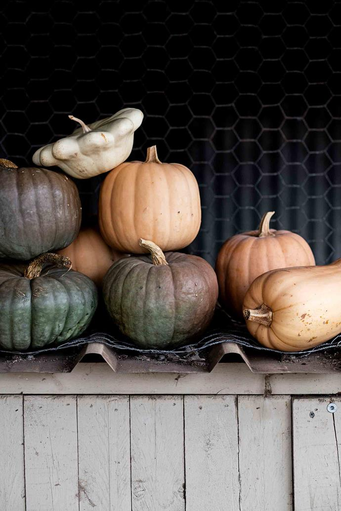 A mix of pumkin varieties, including Queensland Blue and Butternut.