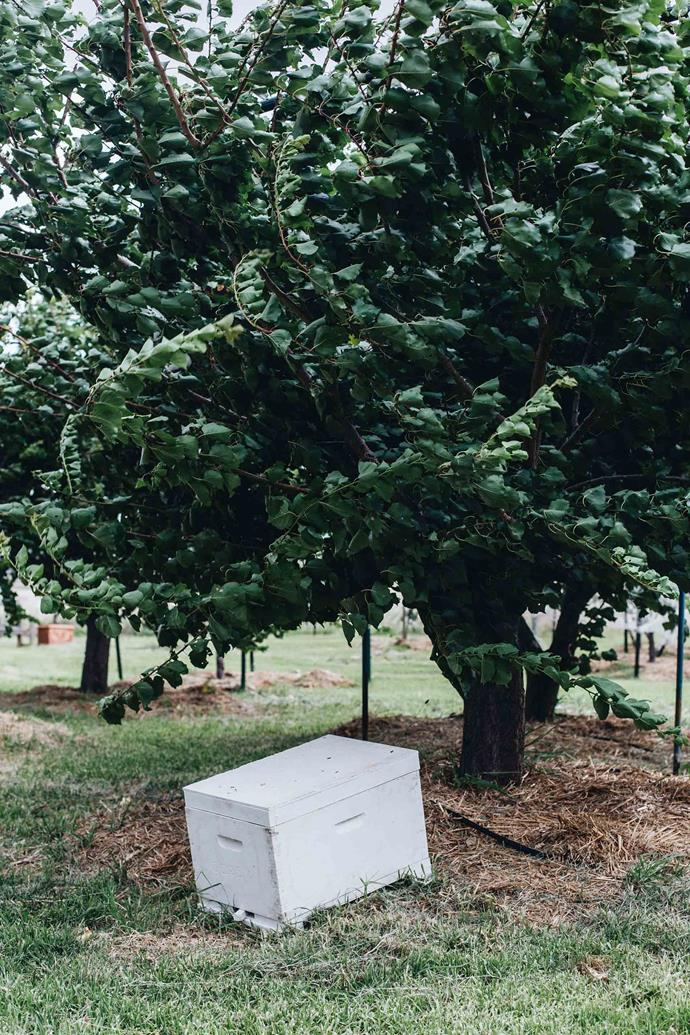 "A [beehive](https://www.homestolove.com.au/adding-a-bee-hive-to-your-garden-9890|target=""_blank"") beneath an apricot tree. Charlie can tell you a story about every tree, gate post, or paddock on his at Hanaminno. Even the property's name has a tale — his parents named it after Hāna Ranch, a working cattle property in Hawaii where they spent their honeymoon (an enterprise that coincidentally now shares Charlie's passion for regenerative farming and more direct supply practices)."