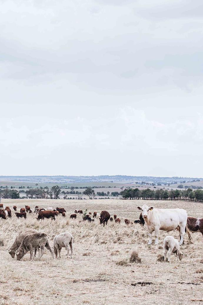 "At Hanaminno, the Arnotts are working to restore the landscape with a view to ""loving the grass more than the cattle"". They graze their Shorthorn cattle for shorter than usual intervals to allow the pasture to rest and regenerate. They also apply a [natural compost](https://www.homestolove.com.au/how-to-start-composting-3767