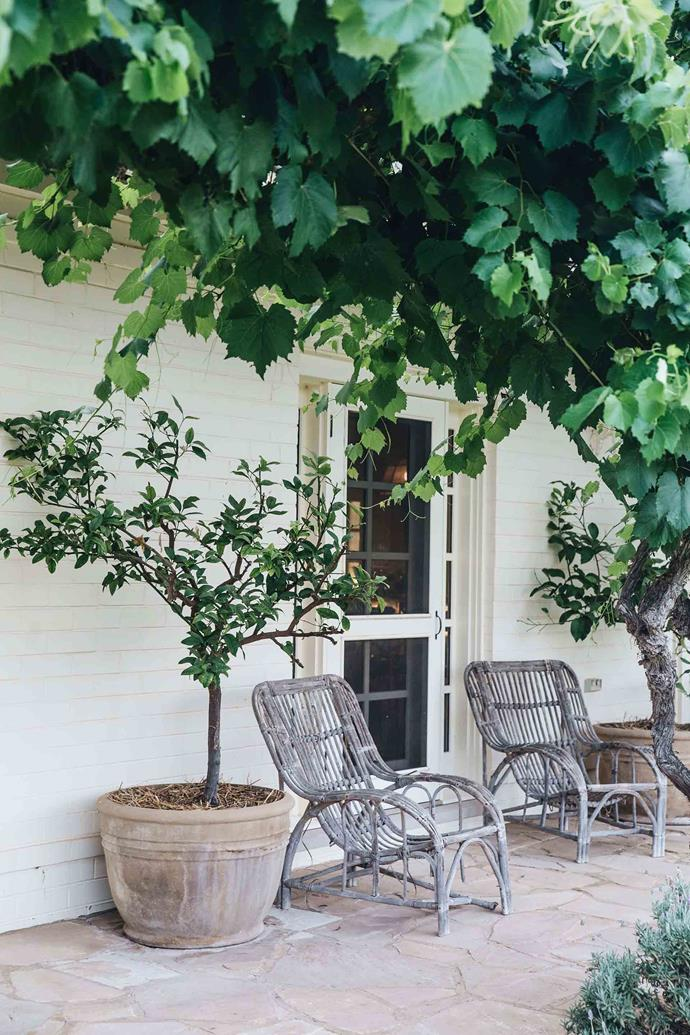 "The verandah offers a leafy place to unwind. ""Angelica is a wonderful cook and we always have vegetables growing. We enjoy that sense of knowing where our food comes from,"" says Charlie."