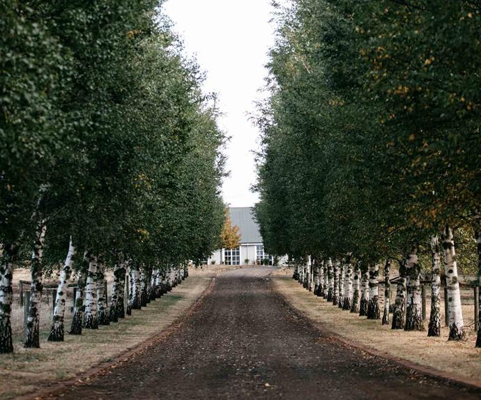 Tree-lined driveway with white farmhouse at the end