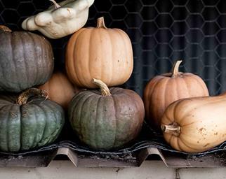 Stack of pumpkins