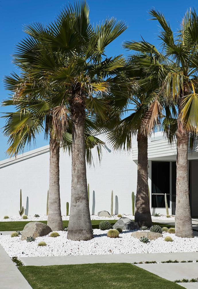 """Hardy palm trees and low-maintenance cacti line the entryway of this [Palm Springs meets Australian coastal style](https://www.homestolove.com.au/oracle-fox-amanda-shadforth-home-20153