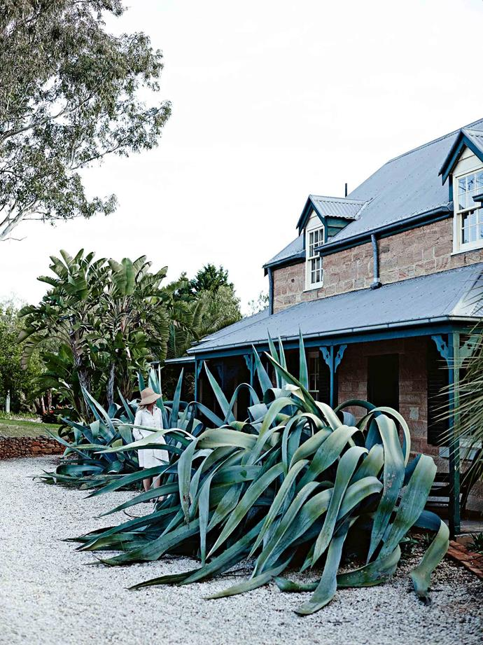 "The garden has informed much of their experience of the house. ""It fills the view from every window,"" Mickey says. Two giant American aloes (Agave americana) flank the entrance to the sandstone cottage, and influenced the choice of upholstery fabric on the blue-grey striped sofa in the sitting room."