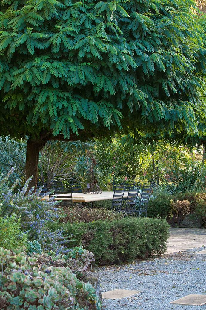 Mop top robinia trees (Robinia pseudoacacia 'Umbraculifera'), shade a paved sitting area and rosemary and teucrium hedges.