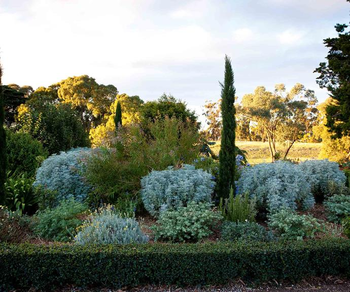 """[Silver foliage plants](https://www.homestolove.com.au/silver-plants-garden-20028