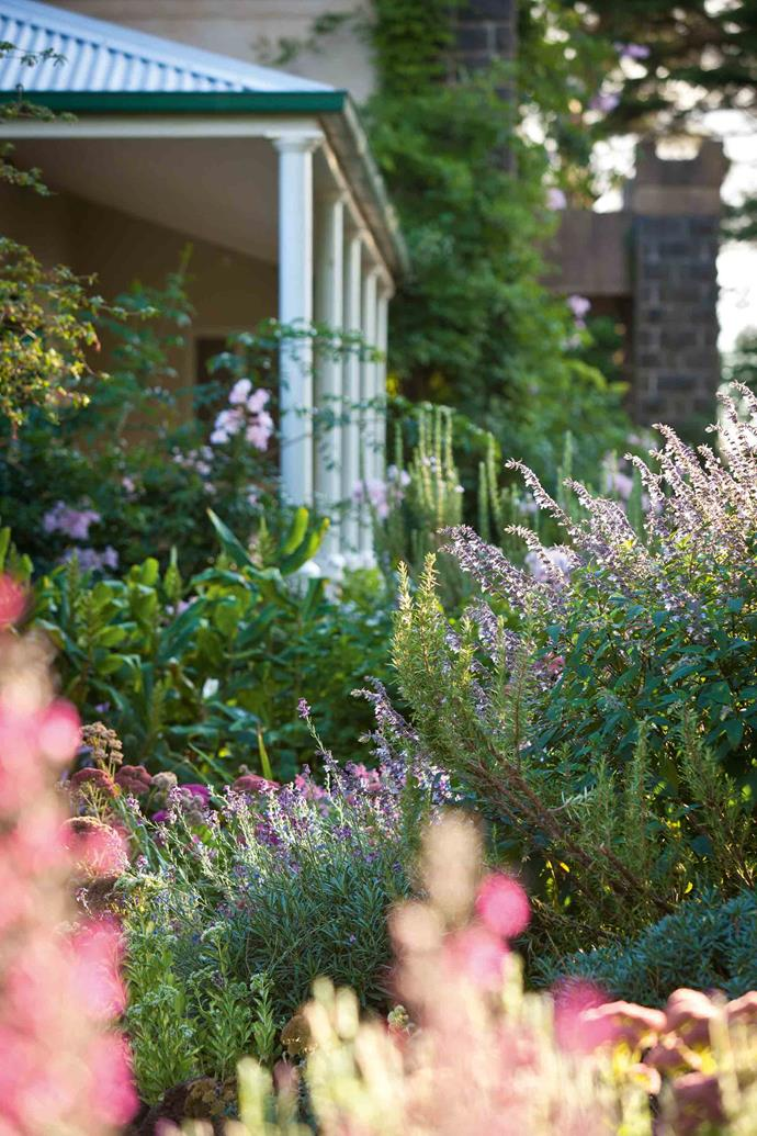 """Pink sedums, rosemary and [salvia](https://www.homestolove.com.au/how-to-grow-salvias-9893