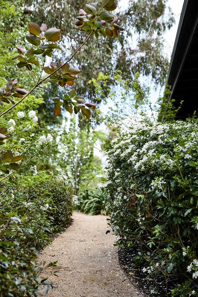A winding dromana stone path is a continuation of the curved theme, while hedges of Indian hawthorn, crepe myrtles and ornamental pears sit either side.