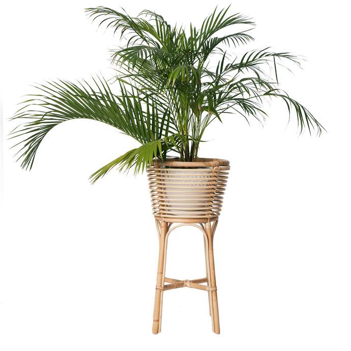 "Raja's rattan planter in Paprika, $175, [Raja Homewares](https://www.rajahomewares.com/product-page/rattan-planter|target=""_blank""|rel=""nofollow"")."