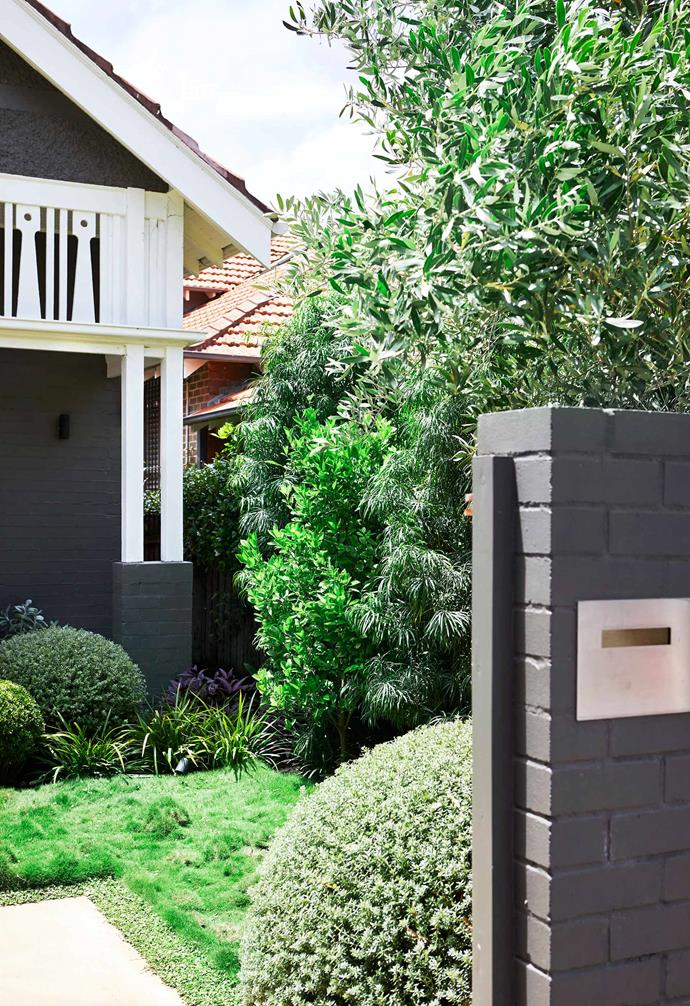 **Front garden** An overarching olive tree, *Fortunella margarita* 'Nagami' and a topiary of coastal rosemary greet visitors to this Sydney home.