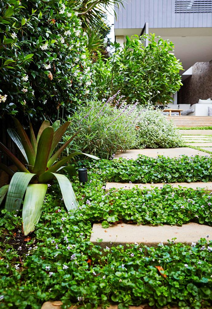 **Entertainment area** Viola hederacea is planted between the sandstone pavers.