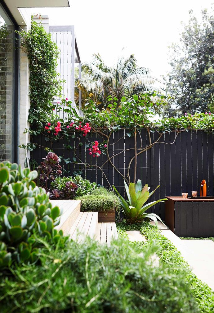 **Barbecue area** The weathered steel top of the barbecue zone works with the timber and sandstone steps. Scarlett O'Hara bougainvillea is trained onto the fence, with a bromeliad in front.