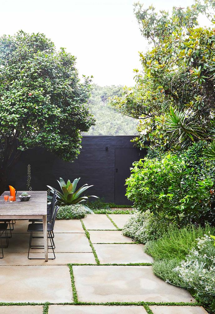 **Entertainment area** Star jasmine and an aromatic mix of curry plant, lavender, santolina and liquorice plant tumble over the paving border edge.