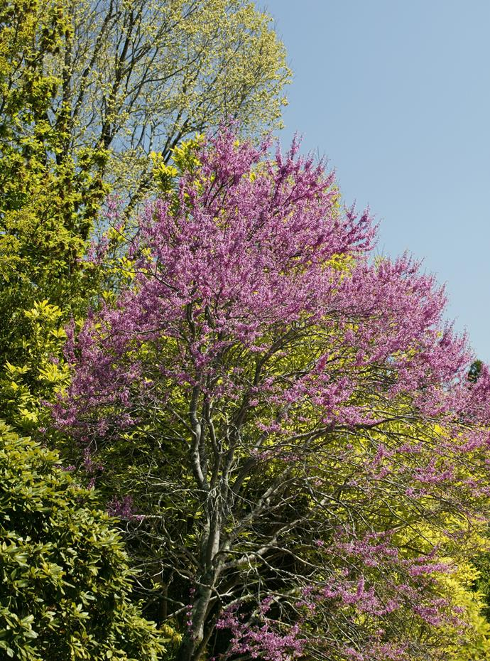 *Photo: Brent Wilson / bauersyndication.com.au*