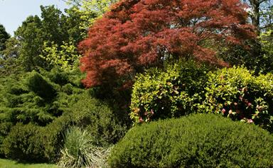 5 fast growing shade trees