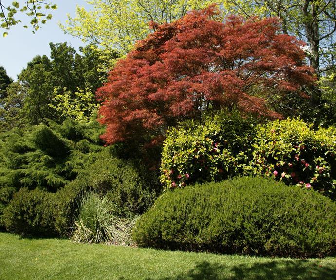 5 fast growing shade trees Australia   Australian House ...
