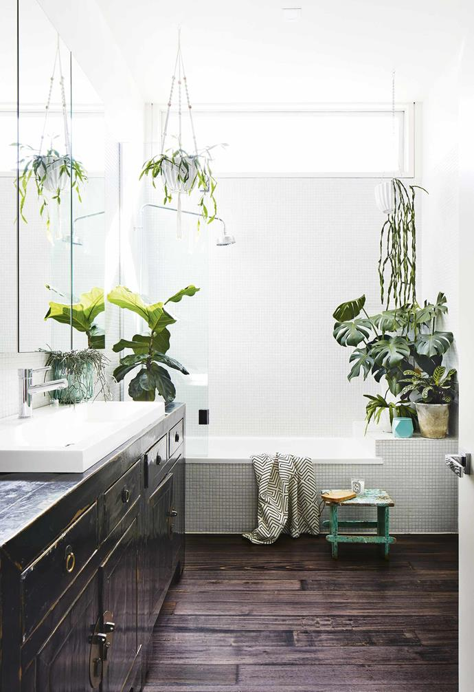 "A vintage dark timber vanity is matched with dark timber flooring in the bathroom of this [renovated miners cottage](https://www.homestolove.com.au/miners-cottage-renovation-geelong-18479|target=""_blank""), so adopting a white palette for the walls and ceiling was an obvious choice. A number of indoor plants add a pop of fresh greenery and colour."