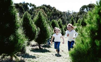 Life on a Christmas tree farm near Sydney