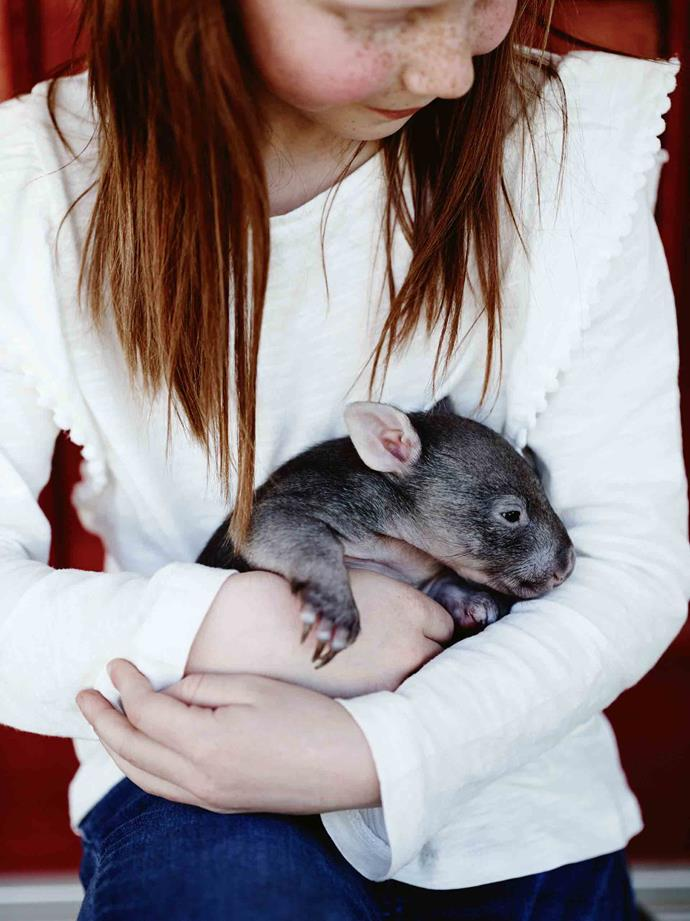 "Daughter Anna cradles Fatso the baby wombat. Christmas Day itself is a brief but welcome reprieve, as the Boags also offer a pick-up service for their trees, which begins in January. ""When that's finished, we go to Avoca on the [NSW central coast](https://www.homestolove.com.au/homewares-stores-central-coast-19992