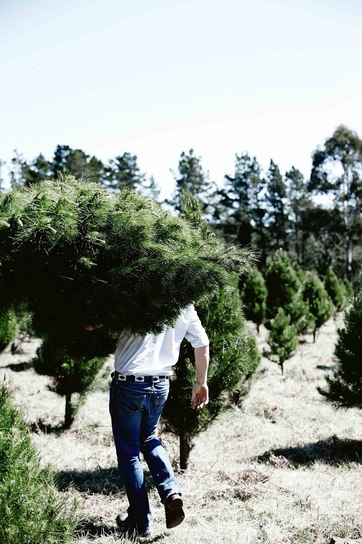 October to December is peak season for Christmas Tree Man, when up to 15,000 trees are cut and delivered to a mix of wholesale and retail customers.