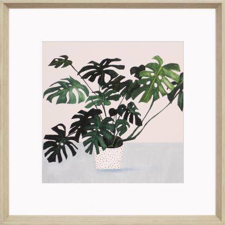"'Monstera' Framed Print (68x68cm), $77.40, [Freedom](https://www.freedom.com.au/decorate/wall-decor/all-wall-decorations/24121583/monstera-framed-print-68x68cm?reflist=decorate/wall-decor|target=""_blank""|rel=""nofollow"")"