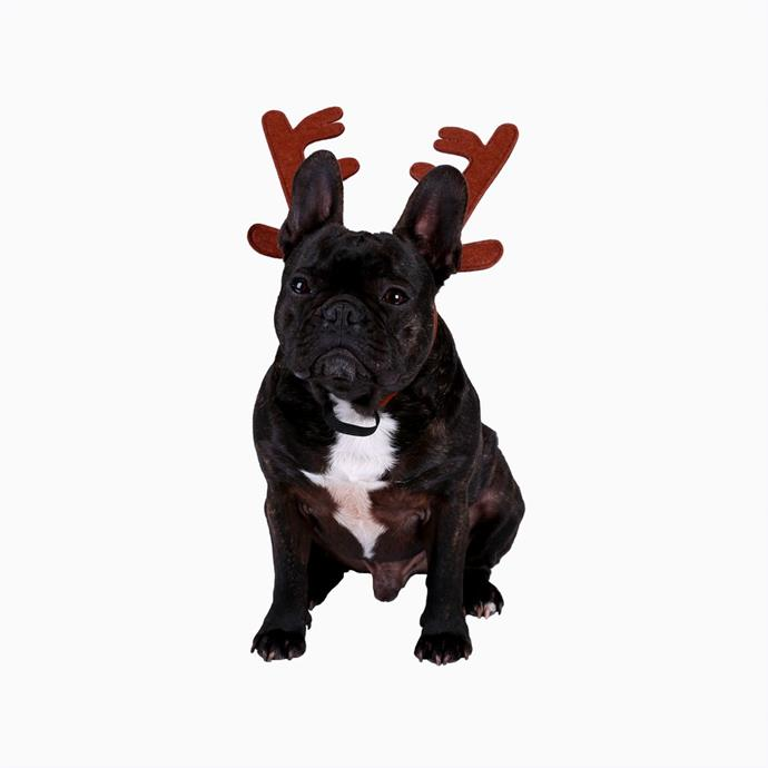 """Christmas Dog Reindeer Accessories Set, $4, [Big W](https://www.bigw.com.au/product/christmas-dog-reindeer-accessories-set-brown/p/54165/