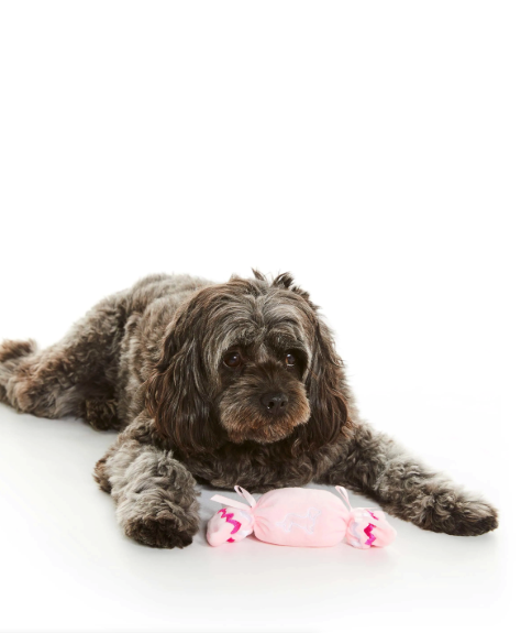 """Xmas Cracker Dog Toy, $12.95, [Peter Alexander](https://www.peteralexander.com.au/shop/en/peteralexander/gifts/shop-for/pups/xmas-cracker-dog-toy?colour=MULTI